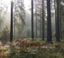 Parc National de Bialowieza
